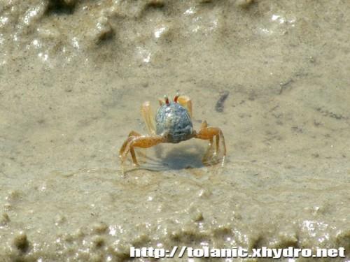 crab_001s