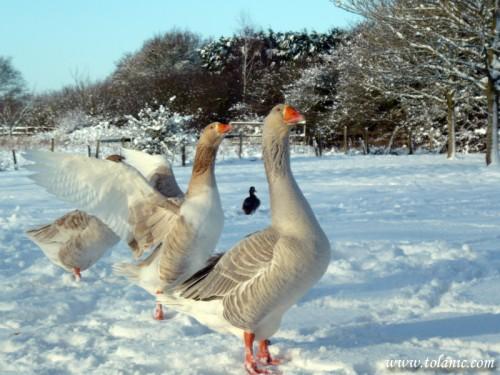United Kingdom - Winter