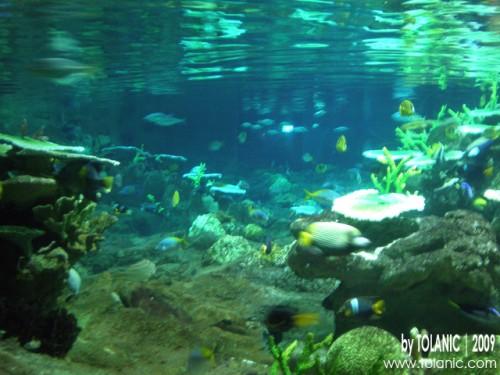 Marine Land Ocean Park Hong Kong